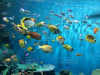 水の中の魚の群しの写真・画像素材[2337116]