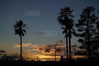晴れた日のヤシの木の群れの写真・画像素材[2316971]