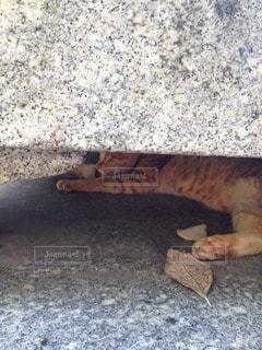 猫の写真・画像素材[91707]