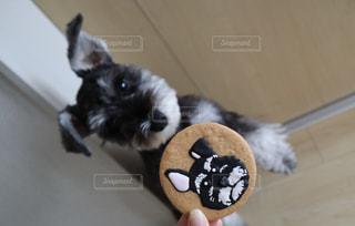 わんことクッキーの写真・画像素材[2322426]