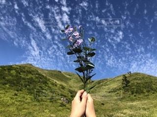 山と空と花の写真・画像素材[2318943]