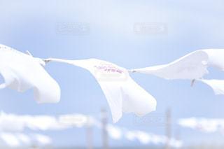空を飛ぶTシャツの写真・画像素材[2319016]