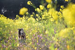 花と時々犬の写真・画像素材[2319034]