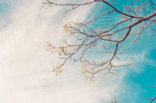 秋空と植物の写真・画像素材[2637105]