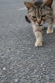 猫の写真・画像素材[105910]