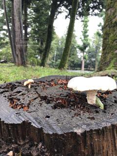 森の中 きのこに出会うの写真・画像素材[2448028]