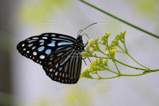 蝶の写真・画像素材[2321569]