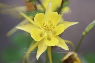 黄色い花の写真・画像素材[2322176]