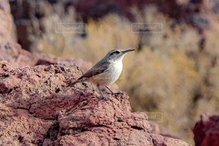 岩の上に座っている小さな鳥の写真・画像素材[2329947]