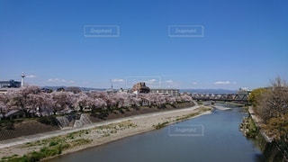 京都タワーと桜並木の写真・画像素材[2325211]