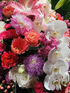 花のクローズアップの写真・画像素材[2324273]