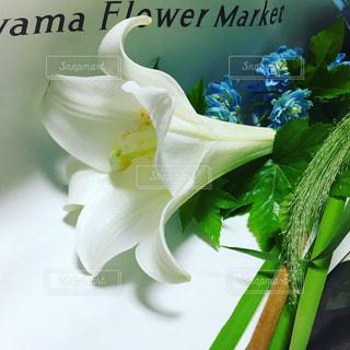 カサブランカ 百合の花束の写真・画像素材[2324799]