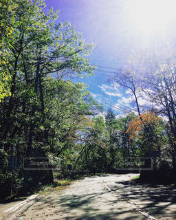 森の木の写真・画像素材[2498403]