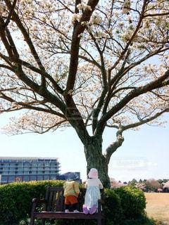 桜の木の下で。の写真・画像素材[2329878]