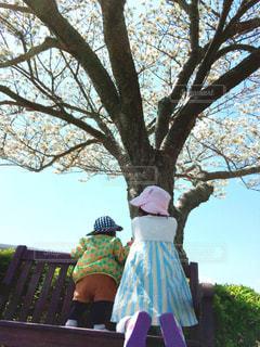 桜の木の下で。の写真・画像素材[2329895]