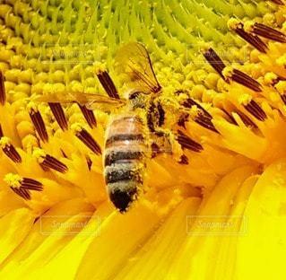 花のクローズアップの写真・画像素材[2327604]