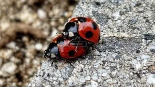 てんとう虫の写真・画像素材[3746122]