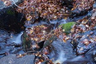 川の流れの写真・画像素材[3952829]