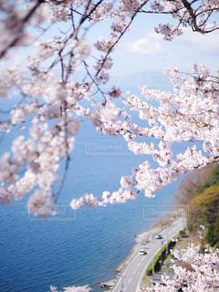 春の湖畔ドライブの写真・画像素材[2329669]
