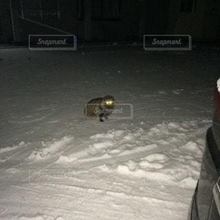 冬の写真・画像素材[90790]