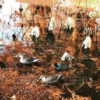 池の鳥たちの写真・画像素材[2330502]
