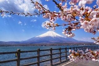 富士山と桜の写真・画像素材[2929314]