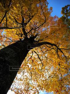 自然の写真・画像素材[265623]