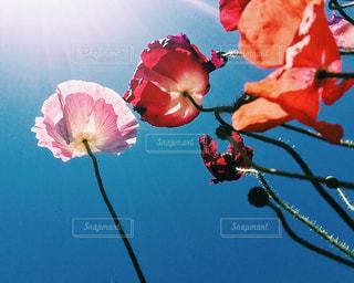 花の写真・画像素材[327508]