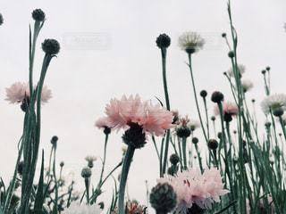 花の写真・画像素材[328441]