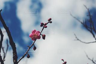 空の写真・画像素材[329412]