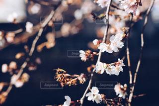 春 - No.329422