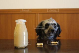 犬 - No.329440