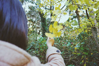 森林の写真・画像素材[337452]
