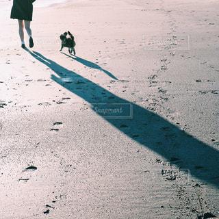 犬の写真・画像素材[337472]