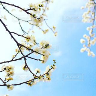 花の写真・画像素材[366368]