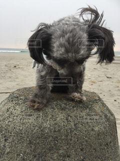 犬 - No.366380