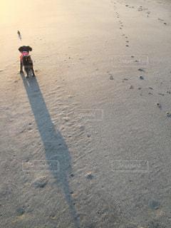 犬 - No.366381