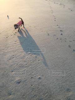 犬 - No.366382