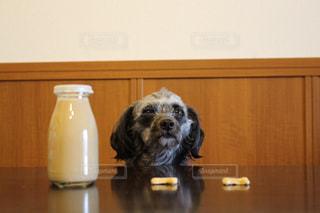 犬 - No.366413
