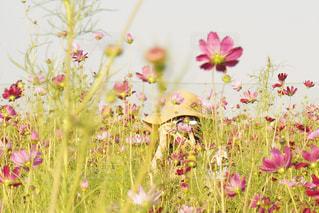 花の写真・画像素材[541412]