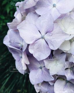 花の写真・画像素材[541504]
