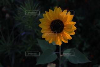 花の写真・画像素材[671545]