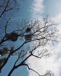 大きな木 - No.934026