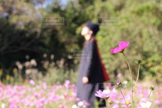 近くの花のアップ - No.971123