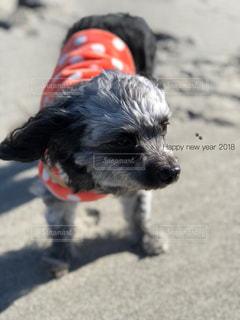 犬のアップの写真・画像素材[971127]
