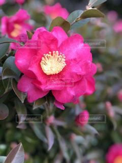 花のアップの写真・画像素材[971128]