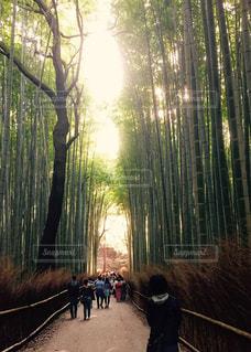 木の隣に立っている人のグループの写真・画像素材[1085159]