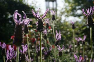 近くの花のアップの写真・画像素材[1170971]