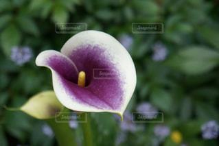 近くの花のアップの写真・画像素材[1170975]