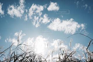 空には雲のグループの写真・画像素材[1171036]